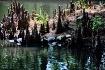 Cypress Turtles