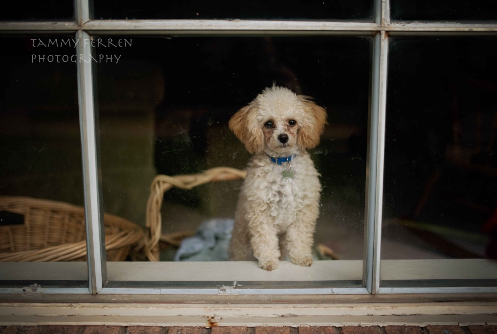 ~~  How Much Is That Doggy In The Window?  ~~