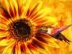 Sunflower Magic