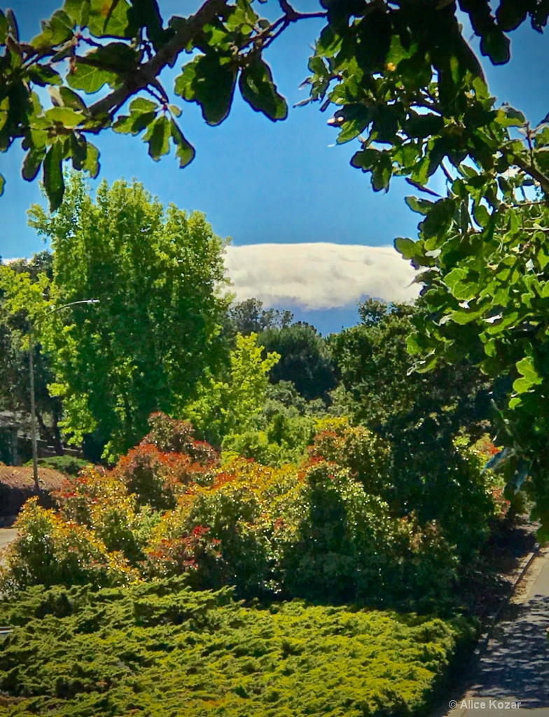Fog-capped coastal mountains...looks like icing!!  - ID: 15386330 © Alice Kozar