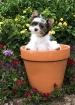 Cutest Flower in ...