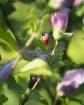 Hidden Nectar
