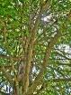 The Climbing Tree...