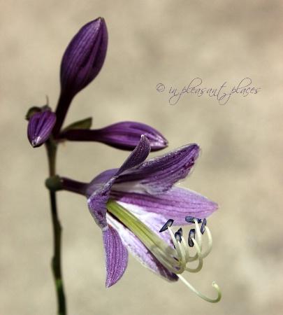 Purple in Focus