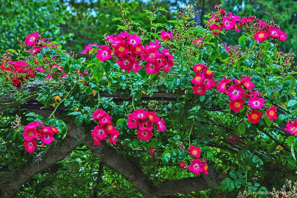 Flower Bough