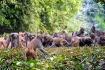 monkey group