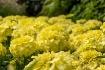 Marigold Bloom