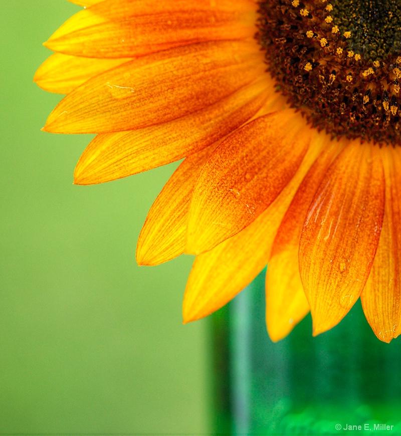 A Sunflower Kinda Day