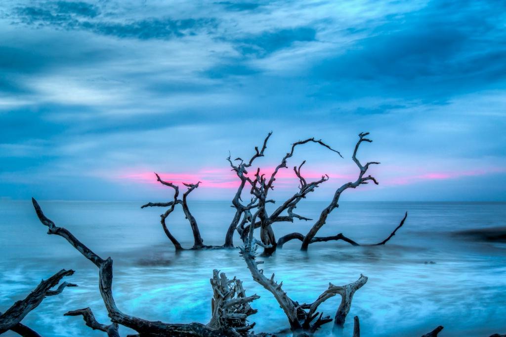 Tangled Sunrise - ID: 15460365 © Jim E. Anderson