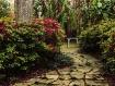 Backyard Paradis...