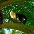 © Donna Rapp PhotoID # 15466652: Capuchin