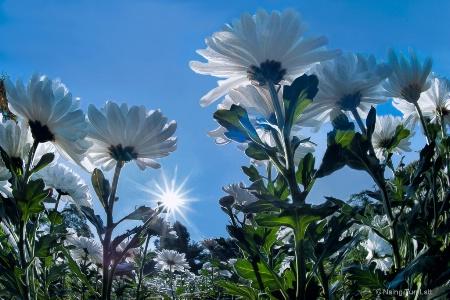 Gandamar flowers