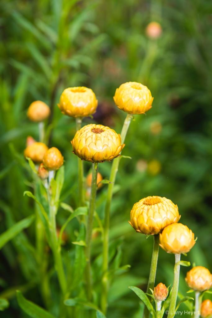 Stan Hywet Gardens - ID: 15471614 © Larry Heyert