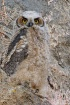 One Great Horned ...