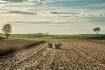 Harvest in Progre...