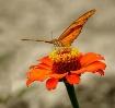 Butterfly in Beli...