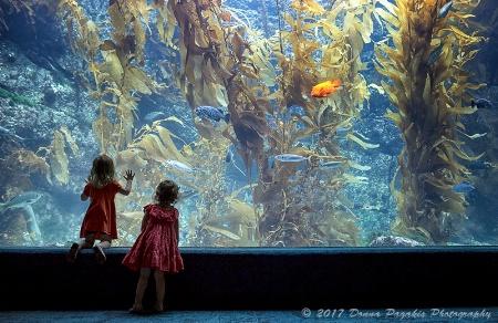 Facination at the Aquarium