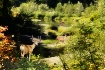 Deer Trail To The...
