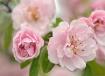 Blossom Flow