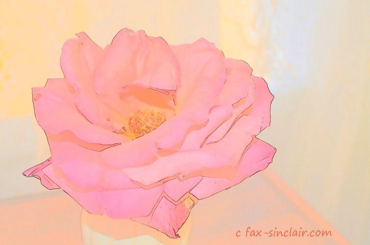 December Rose Essence - ID: 15500559 © Fax Sinclair