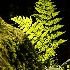 © Dreaming Tree Galleries PhotoID# 15502270: