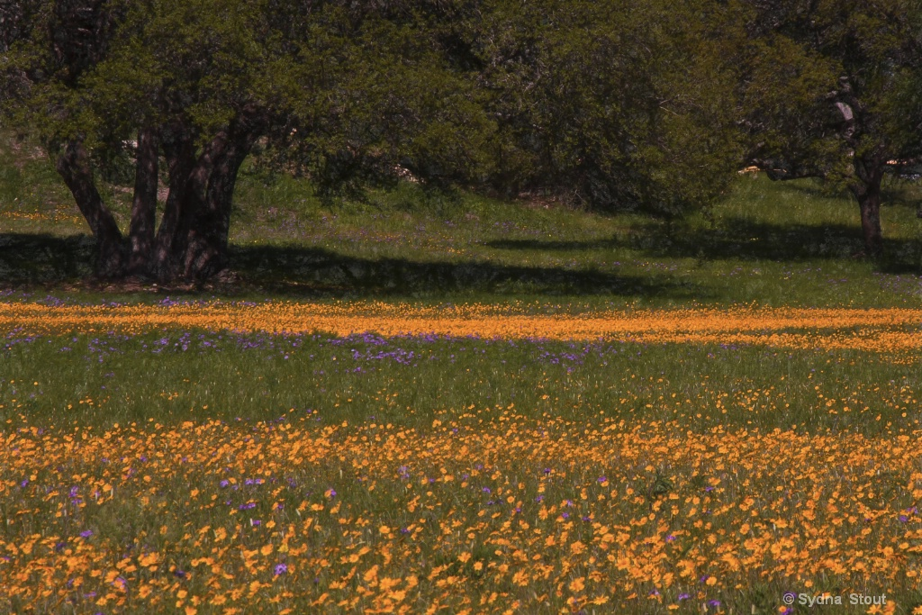 Hill Country Spring - ID: 15503784 © Sydna  Stout
