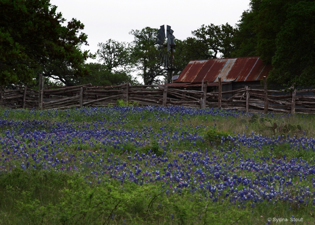 old barn - ID: 15503941 © Sydna  Stout