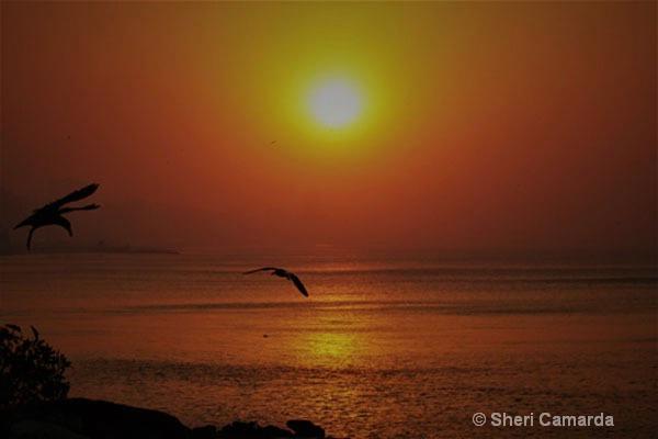 Flying Low! - ID: 15506761 © Sheri Camarda