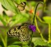 The Butterfly Gar...