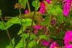 In the Petunias