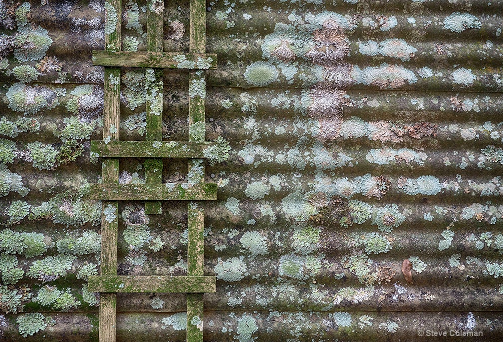 Mossy Patterns
