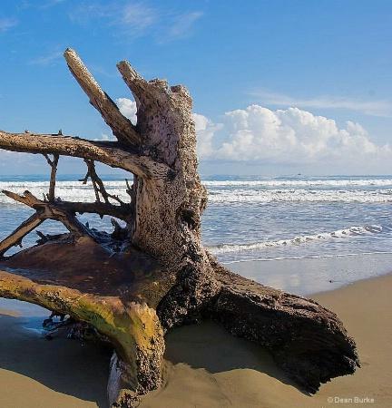 Beach Wood