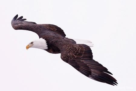 The Flight!