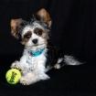 It's My Ball