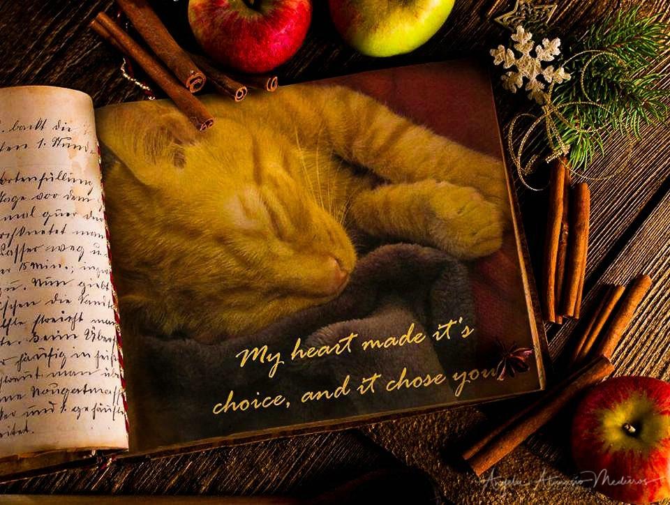 My Heart Chose You - ID: 15528117 © Angela Atanasio-Medeiros