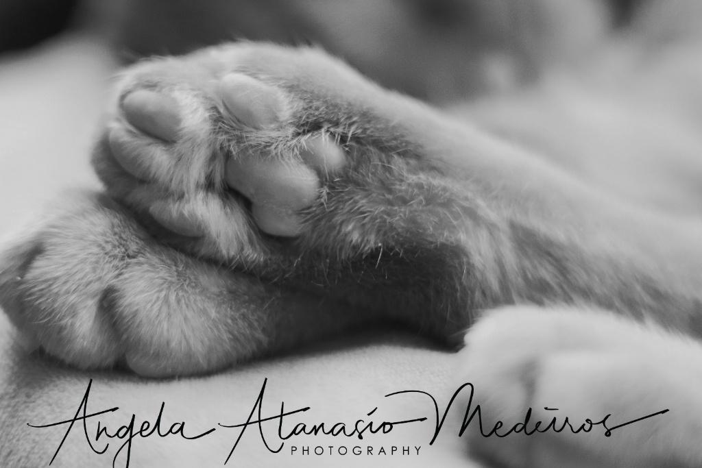Kitty Paw Paw - ID: 15528718 © Angela Atanasio-Medeiros