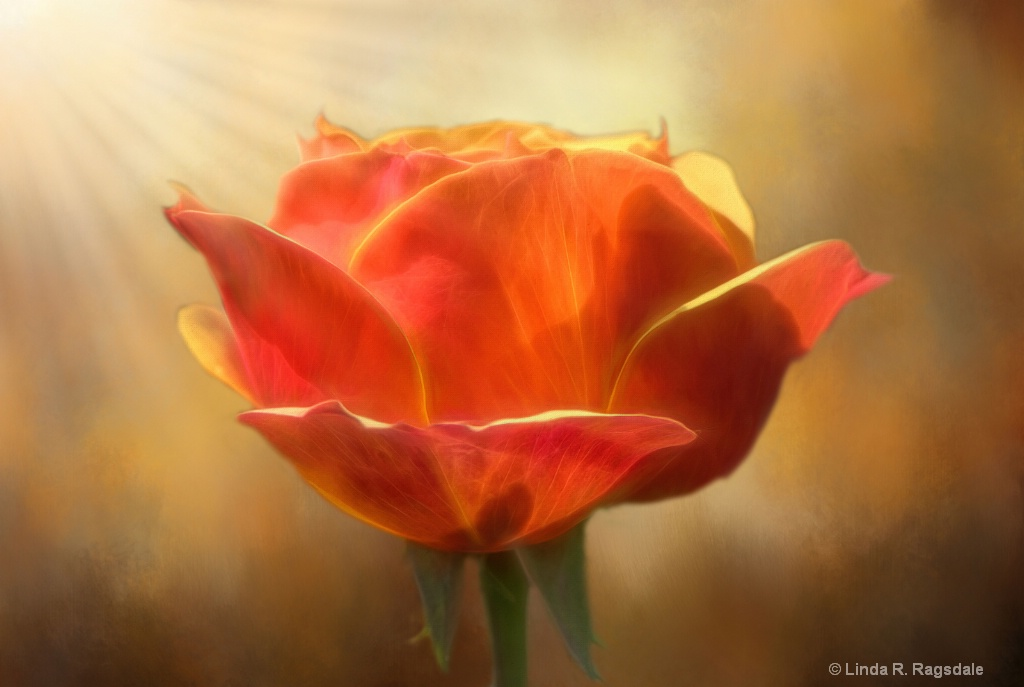 sun in the morning - ID: 15545862 © Linda R. Ragsdale