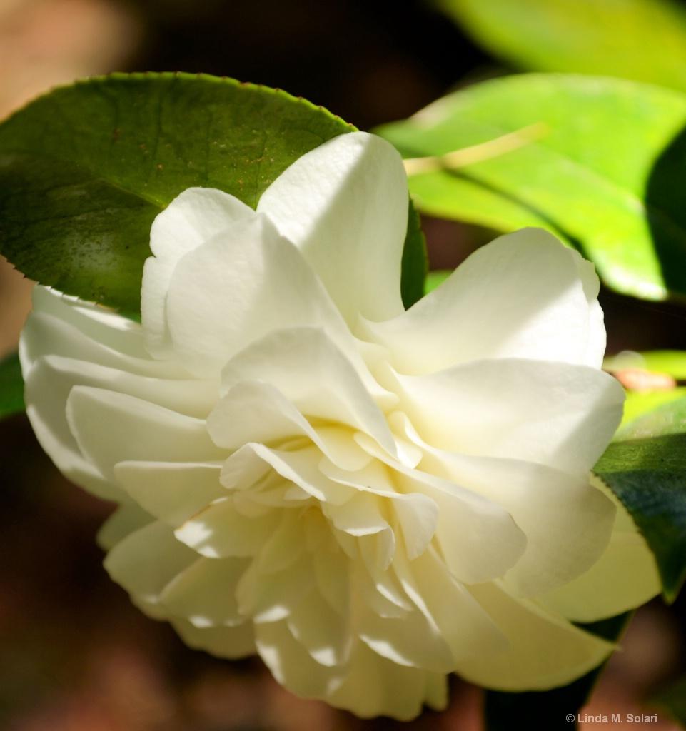 Our Granddaughter's Flower - ID: 15562278 © Linda M. Solari