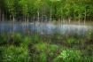 Pond By Bozenkill