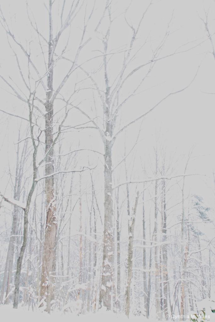 Bare Trees - ID: 15572419 © Cynthia M. Wiles