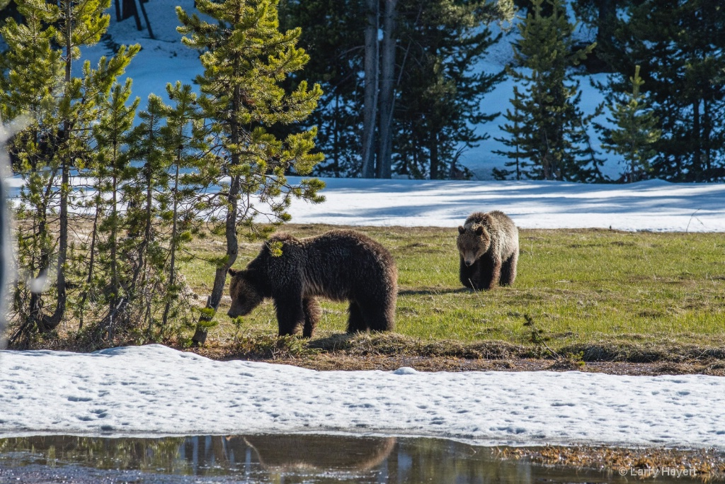 Springtime Stroll - ID: 15574039 © Larry Heyert