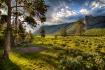 Yellowstone Morni...