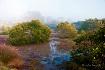 Misty Mangroves