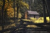 Cabin in the Wood...