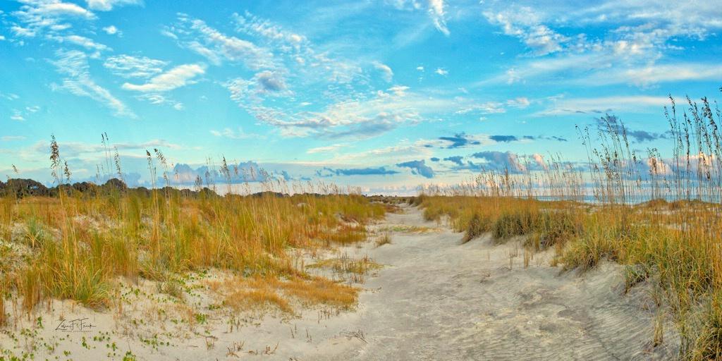 Sand Dunes at Kiawah Ocean Golf Course - ID: 15592208 © Zelia F. Frick