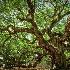 2Angel Tree - ID: 15592211 © Zelia F. Frick