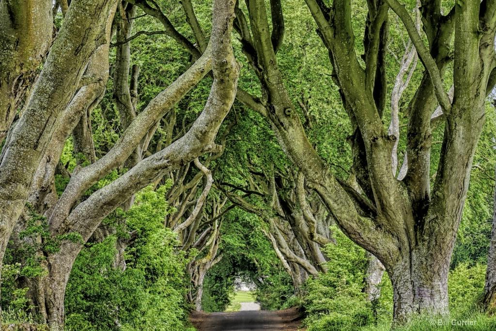 Dark Hedges - Northern Ireland - ID: 15594942 © Bill Currier
