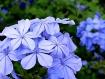 Flowers 184339