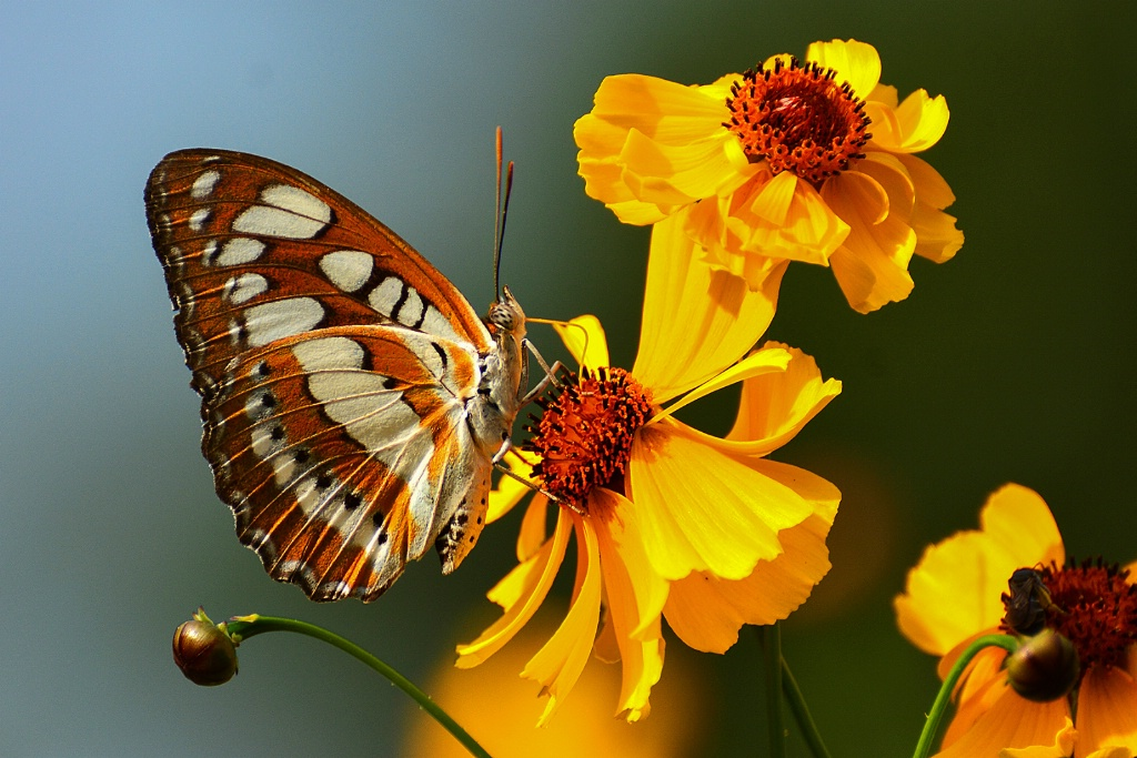 Colorful Butterfly 05