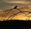The Early-Bird Ge...